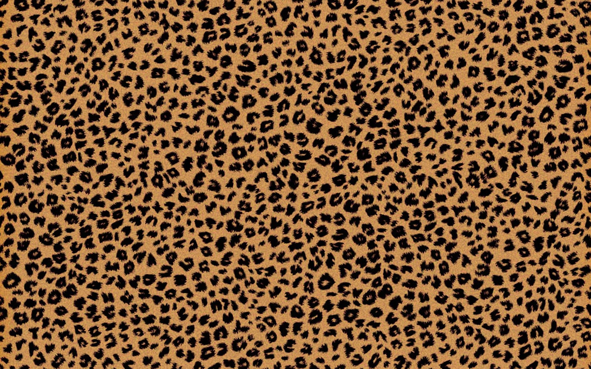 tumblr cheetah print backgrounds images pictures becuo