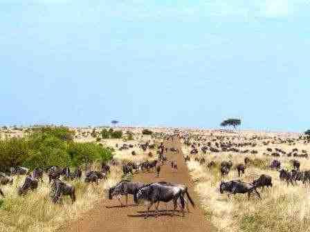 Masai Mara Traumtagebuch