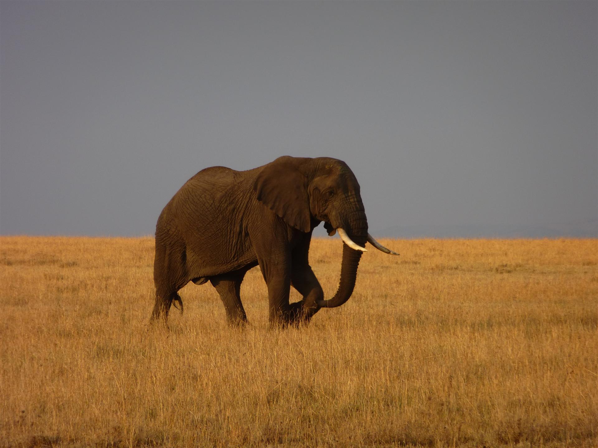 Safari Nairobi – Mombasa